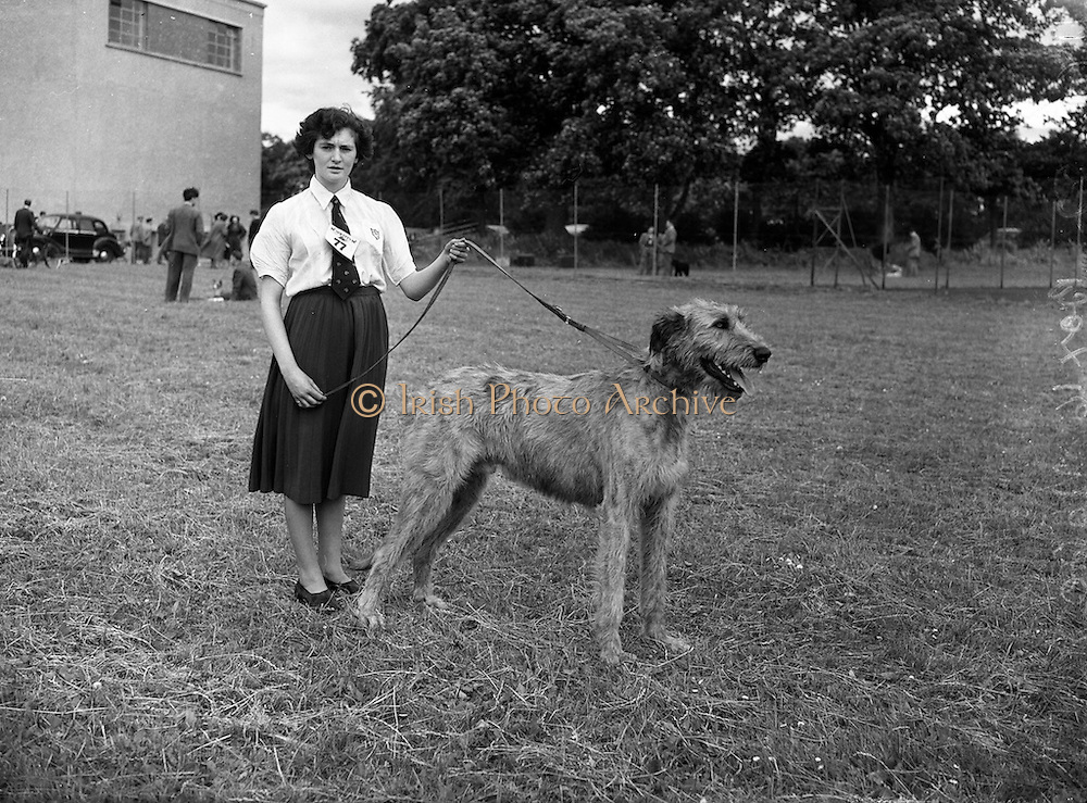 """19/07/1952<br /> 07/19/1952<br /> 19 July 1952<br /> Dog show: All Breed Championship, 10th Annual Show of the Combined Canine Clubs at Terenure College,<br /> Templeogue Road Terenure Dublin. Miss Billie Kerr Donnan, Castle Down, Cloughy, Co. Down, with her Irish Wolfhound """"Fuath f Ulaid""""; (1st in Junior and Graduate Class)."""