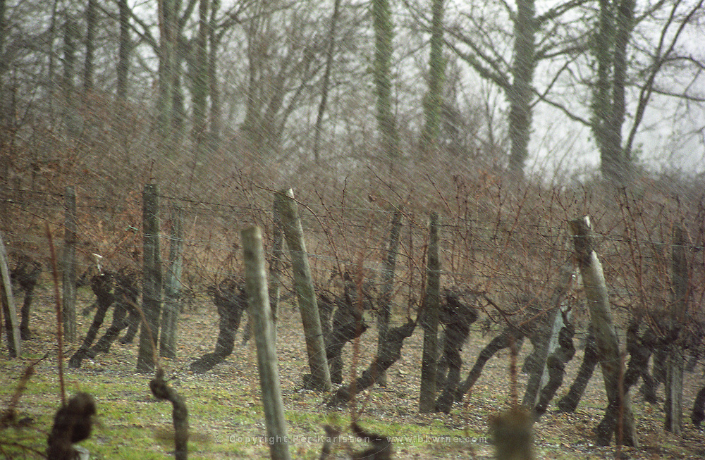 hail storm in vineyard bourgueil loire france