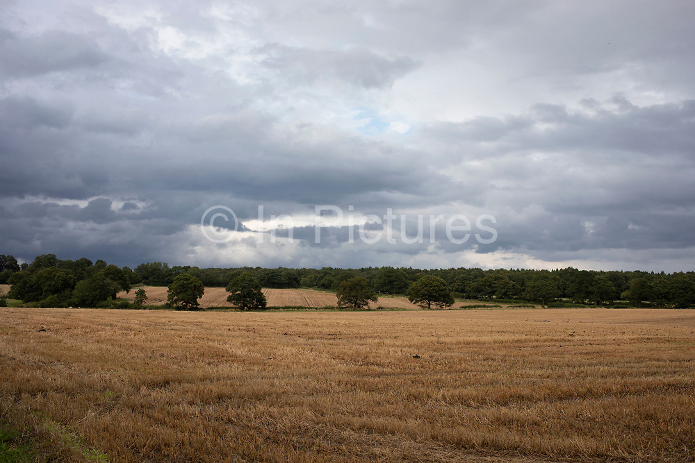 Harvested wheat field under darkening skies at in Baddesley Clinton, England, United Kingdom. Golden colour, these ripe heads of grain, which is also known as corn, are a crop ready to be harvested. Wheat is a cereal grain cultivated worldwide. In 2013, world production of wheat was 713 million tons, making it the third most-produced cereal.