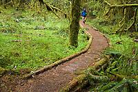 Hiker walks through Ancient Groves, Olympic National Park, Washington.