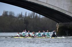 Cambridge Men's Blue Boat crew celebrate victory in the Men's Boat Race on the River Thames, London.