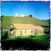 2013 March 10:  Malibu Winery location wine art.  Spring Vines.  iPhone Hipsta