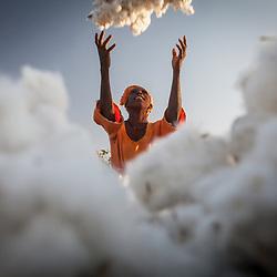 Cotton production, Senegal