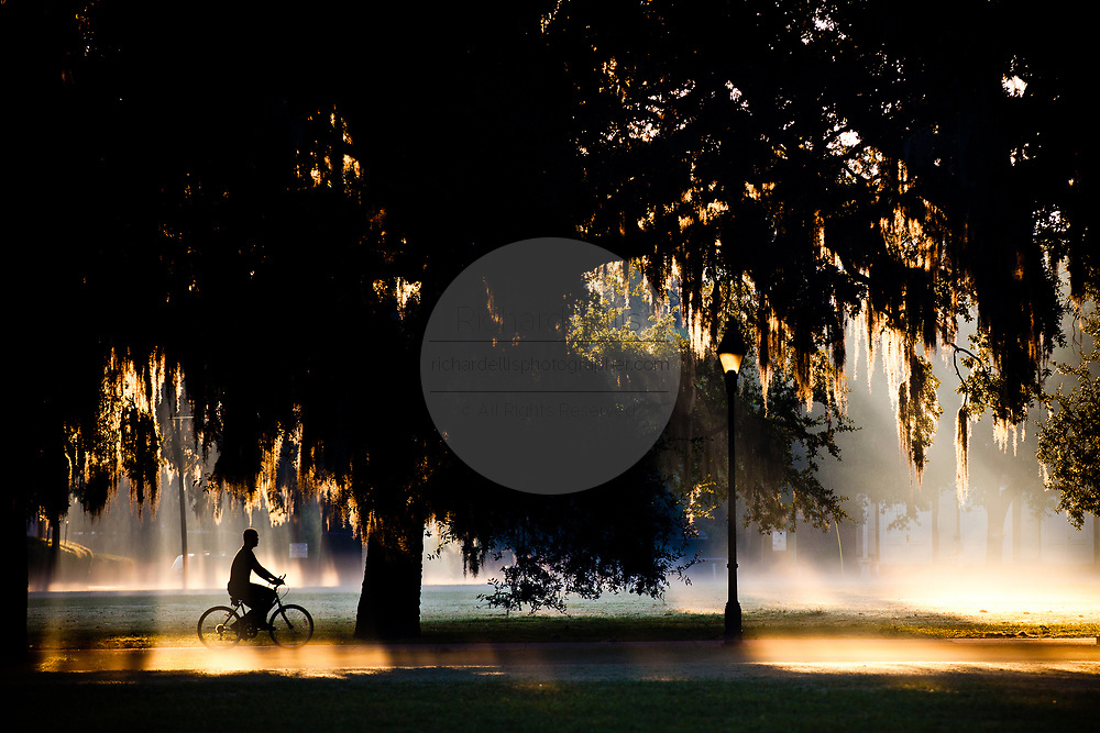 Morning fog in historic Forsyth Park in Savannah, Georgia, USA.