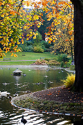 The duck pond in Weston Park Sheffield<br /> 21 October 2012<br /> Image © Paul David Drabble