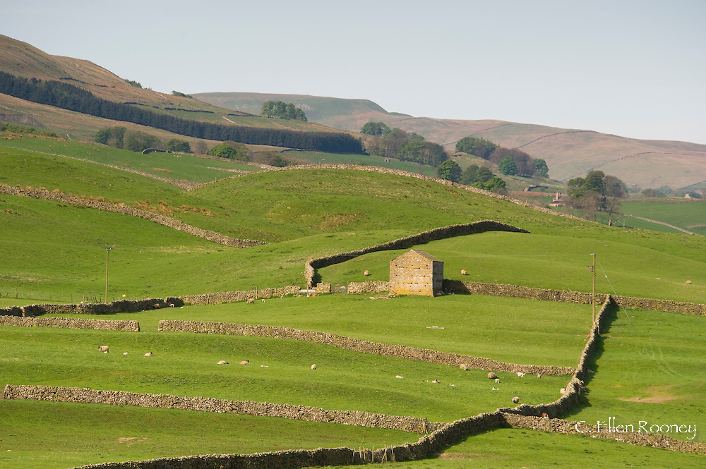 A stone barn and walls in fields outside Bainbridge, Wensleydale, The Yorkshire National Park, Yorkshire, England, UK