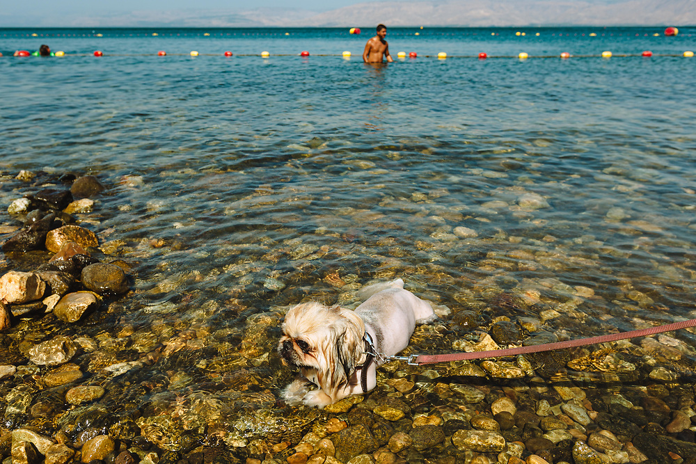 A dog cools off in the water during a hot summer day at Ganim Beach on the shores of the Sea of Galilee (Kinneret in Hebrew), in the city of Tiberias, northern Israel