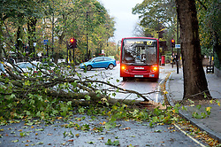 © London News Pictures. 28/10/2013 . London, UK.  A fallen tree branch blocking the road in St John's Wood, North London after strong winds swept the capital causing damage and travel disruptions. Gusts of 99mph have been recorded as a storm continues to batter parts of England and Wales. Photo credit : Ben Cawthra/LNP