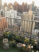 New York City residential balcony with flower garden