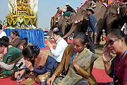 Local people praying at the baci ceremony with several domesticated Asian elephants and their mahouts in the background, Sayaboury elephant festival, Sayaboury province, Lao PDR. The baci is a long series of chanted blessings and exhortations to welcome back any 'kwans' or body spirits that might have been lost. In traditional Lao culture it is believed that elephants, like humans, have 32 kwan (or souls), vital for health and spiritual wellbeing. Originally created by ElefantAsia in 2007, the 3-day elephant festival takes place in February in the province of Sayaboury with over 80,000 local and international people coming together to experience the grand procession of decorated elephants. It is now organised by the provincial government of Sayaboury.The Elephant Festival is designed to draw the public's attention to the condition of the endangered elephant, whilst acknowledging and celebrating the ancestral tradition of elephant domestication and the way of life chosen by the mahout.