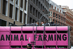 Animal rights activists from Animal Rebellion are pictured locked to the top of and inside a pink slaughterhouse truck in order to block the road outside the Department of Health and Social Care on 3 September 2020 in London, United Kingdom. Animal Rebellion activists are protesting in solidarity with victims of the global food system and to demand that the UK transitions to a sustainable plant-based food system.