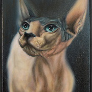 """Title: Hairless Cat Study<br /> Artist: Juan Carlos Amorrortu<br /> Date: 2011<br /> Medium: Oil on canvas<br /> Dimensions: 11.5 x 14.5""""<br /> Instructor: Janet Brooks<br /> Awards: First Place in Painting, 35th Annual Student Art Exhibition<br /> Status: On Display<br /> Location: Eastview Campus, Building 8000, Rm 8356, Health Sciences Division"""