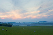 Free-range sheep grazing in the mist on the Berkshire Downs at Sheepdrove Organic Farm, Lambourn, England