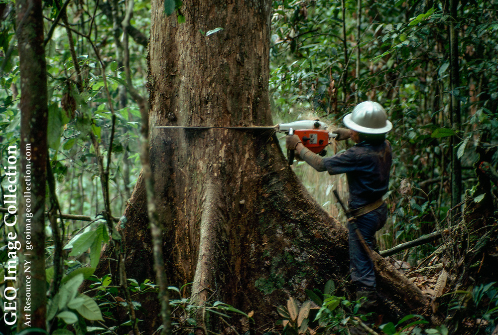 Logger with a chain saw working in an Indonesian rain forest.