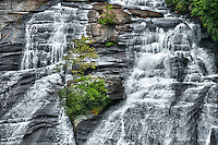 Dupont forest's High Falls