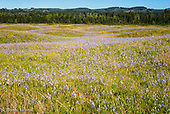 Mima Mound Natural Area