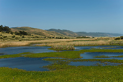 California: Wetlands near Limantour Beach at Point Reyes National Seashore near San Francisco. Photo copyright Lee Foster. Photo # casanf81253
