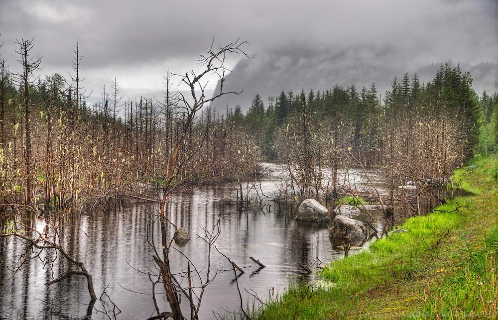 Wilderness of Mendenhall Valley, Juneau