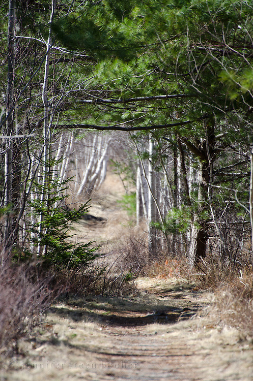 A narrow pathway leads hikers into Acadia National Park, Maine.