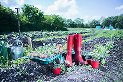 Red rubber boot and saplings in field, Bavaria, Germany