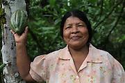 Carmela Abrego Pineda, a Ngäbe indigenous woman and member of COCABO, holds a green cocoa pod. COCABO: Junquito, Almirante, Changuinola, Bocas del Toro, Panamá. September 1, 2012.