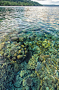 Shallow Coral Reef<br /> Ceram Island<br /> Banda Sea<br /> Indonesia