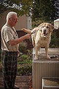 USA, Oregon, Keizer, man brushing his Labrador Retriever