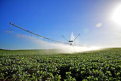 Lavoura de soja com irrigação por pivô. FOTO: Jefferson Bernardes/Preview.com