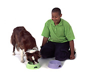 Young Boy, watching Border Collie dog eat food from bowl, aged 14 years, grooming , studio, cut out, white background, pet, domestic