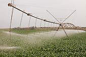 Irrigacao | Irrigation