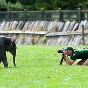 Baby Elephant Whipsnade Zoo