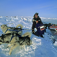 INTERNATIONAL ARCTIC PROJECT EXPEDITION. Dogs & team struggle to keep sled from sinking into 10,000'-deep Arctic Ocean after thin ice broke near North Pole.
