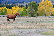 A lone horse in a field near the Teton Mountains in Wyoming. Missoula Photographer