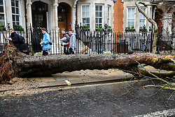 © Licensed to London News Pictures. 09/02/2020. London, UK. A large tree has fallen in Buckingham Palace Road outside the National Express Coach Station, blocking coaches from the coach station. Heavy rain and strong winds are forecast today as the Storm Ciara reaches London. Photo credit: Dinendra Haria/LNP