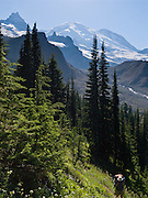Mount Rainier rises to 14,411 feet elevation as seen from the Wonderland Trail to Summerland, in Mount Rainier National Park, Washington, USA.