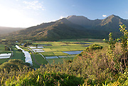 Hanalei Valley, Hanalei, Kaua'i, Hawai'i