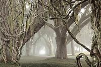 The Avenue of Oaks, Retreat Plantation, St. Simons Island, Georgia