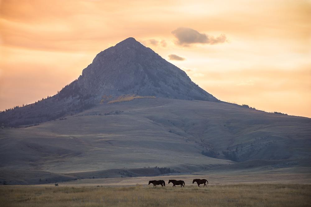 Haystack Butte, Horses, near Augusta, Montana