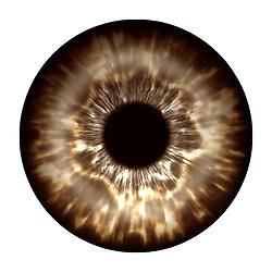 dark brown eye iris eye iris eye iris