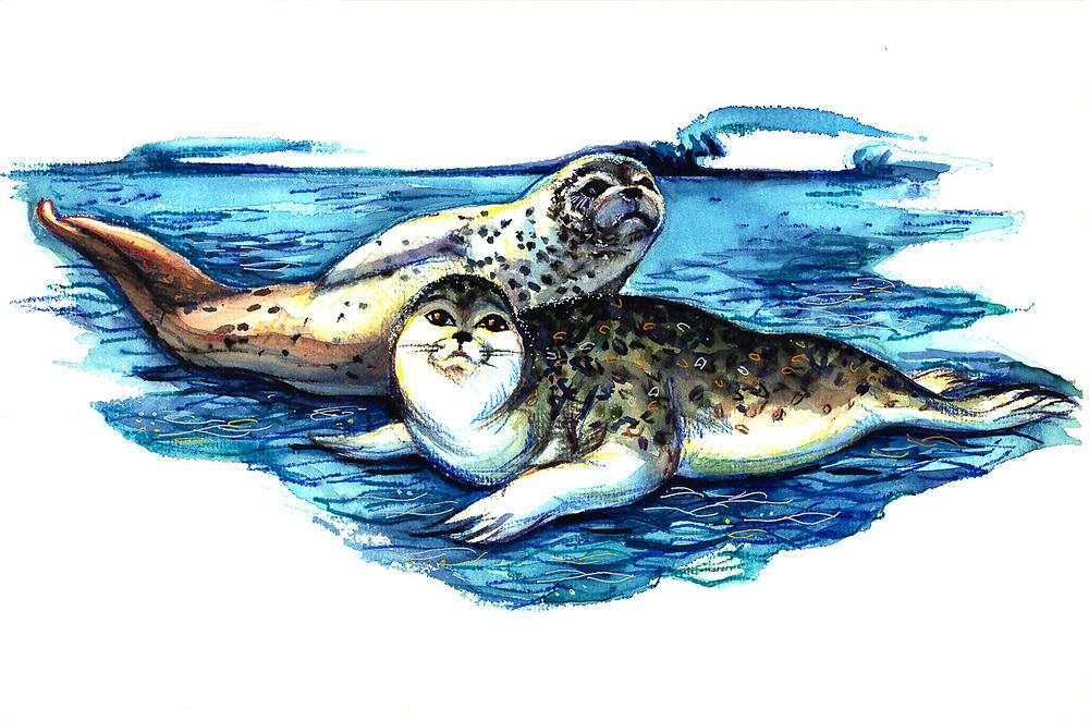 Seals watercolor by Nana Gerasimova, ©Pat O'Hara