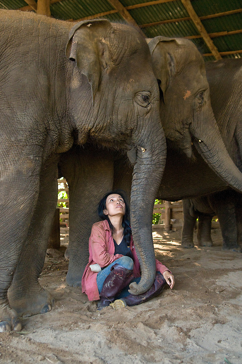 """Sangduen """"Lek"""" Chailert at the Elephant Nature Park near Chiang Mai, Thailand.  Sangduen """"Lek"""" Chailert founded the park as a sanctuary and rescue centre for elephants.  The park currently has 32 elephants sponsored and supported by volunteers from all over the world."""