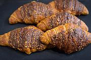 Wheat, Triticum sp.<br /> Showcase: 174.01 Clark's Cream x Arapahoe;<br /> 260.06 Rouge de Bordeaux x Warthog; 47.04 Maxine x Gua; 140.05 Warthog x Gua<br /> Breeder: Julie Dawson, The Seed to Kitchen Collaborative, University of Wisconsin<br /> Baker: Andrew Hutchison, Madison Sourdough