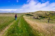 Hiker on the Scorpion Canyon Loop Trail, Santa Cruz Island, Channel Islands National Park, California USA