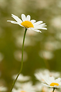 Daisy at Willamette Mission State Park.