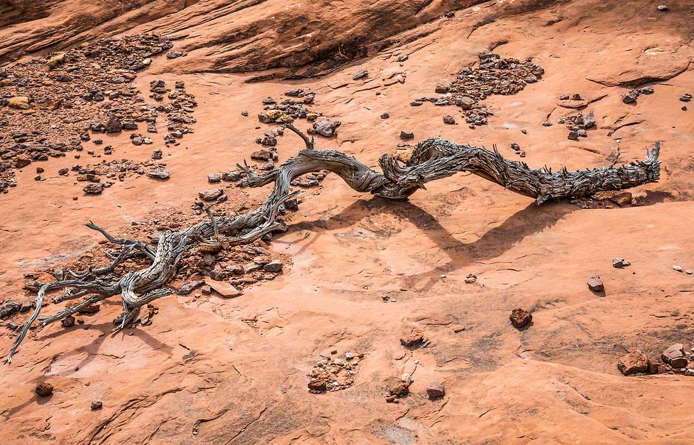 An old dead Juniper tree remains and rocks. Desert struggles. Needles District, Canyonlands national Park, Utah, USA.