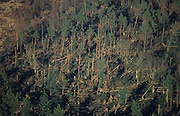 DEFORESTATION STORMS, France. Europe. Hagenau. Hurricane force winds uprooted millions of  trees across Europe. Dry weather followed  by heavy rain made the roots vulnerable.  Winds of 100-200kmh swept through the land  causing havoc. Hundreds of millions of trees were knocked down.