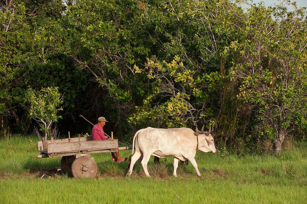 Amerindian<br /> Nappi Amerinidian Village<br /> Rupununi<br /> GUYANA<br /> South America