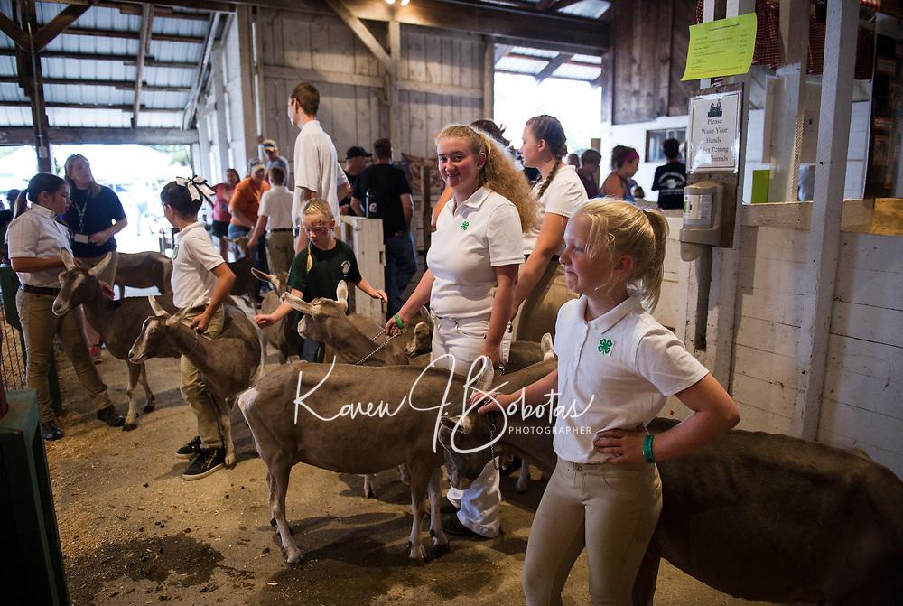 Belmont 4H Fair.  Karen Bobotas for the Laconia Daily Sun