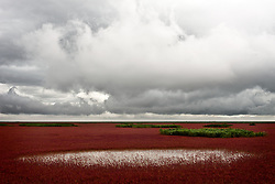 Caption: Red Marsh, Panjin China AUG 2012<br /> <br /> BIO: Camille Seaman was born in 1969 to a Native American (Shinnecock tribe) father and African American mother. She graduated in 1992 from the State University of New York at Purchase, where she studied photography with Jan Groover and John Cohen. Her photographs have been published in National Geographic Magazine, Italian Geo, German GEO, TIME, The New York Times Sunday magazine, Newsweek, Outside, Zeit Wissen, Men's Journal, Seed, Camera Arts, Issues, PDN, and American Photo among many others, She frequently leads photographic workshops. Her photographs have received many awards including: a National Geographic Award, 2006; and the Critical Mass Top Monograph Award, 2007. She is a TED Senior Fellow, Stanford Knight Fellow as well as a Cinereach Filmmaker in Residence Fellow.<br /> <br /> WEBSITE: camilleseaman.com<br /> INSTAGRAM: @camilleseaman