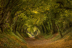 © Licensed to London News Pictures. 23/10/2020. Chichester, UK. Walkers enjoy the autumnal colours on a tree lined walk near Chichester in West Sussex. A mixture of sunshine and showers is hitting areas on the south coast today. Photo credit: Peter Macdiarmid/LNP